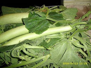 Pasta cu li tenerumi (senza glutine) - La Cassata celiaca